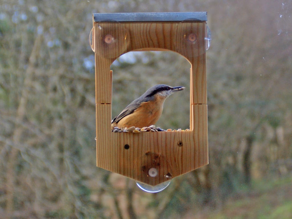 how to get birds to your feeder